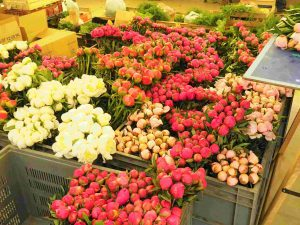 Pivoines au marché du Boulingrin