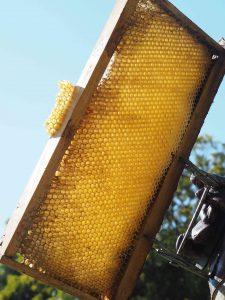 Cadre de ruche aux Crayères