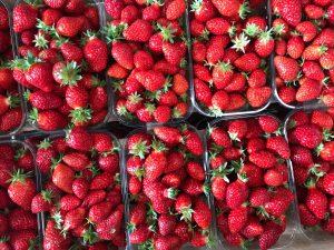 Les fraises… il n'y a plus qu'à les déguster !
