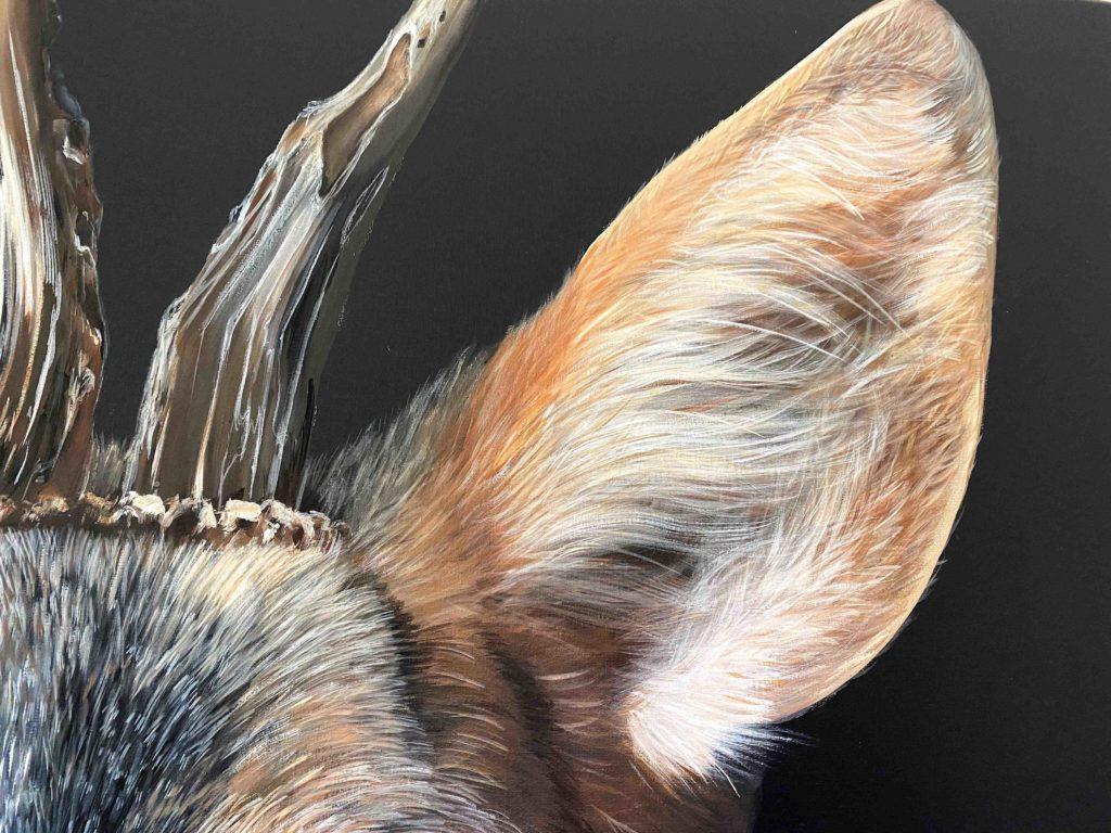 Brocard détails de l'oreille