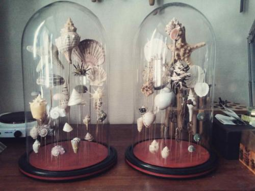"Globes ""Coquillages"""