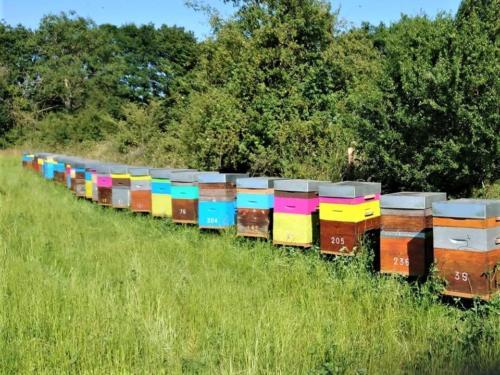 Les ruches de la Ferme, au soleil !