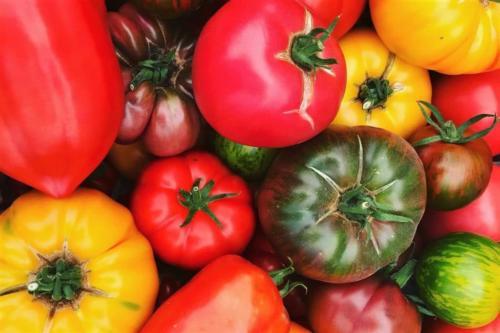 Vivement la saison des tomates !